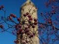Berries and Round Tower