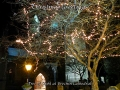 Tree of Light Xmas Card